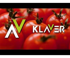 Holandia- praca przy pakowaniu warzyw i owoców